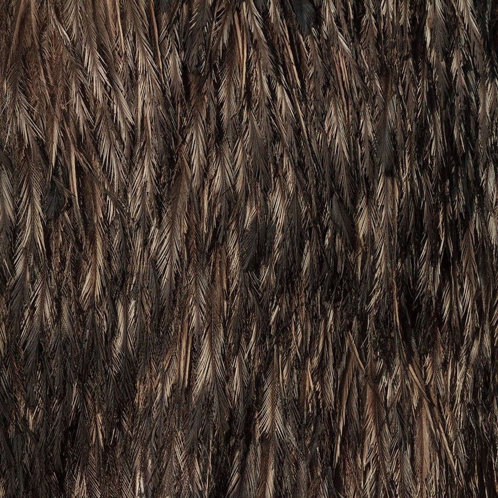 closeup-photographs-of-animal-skin-emu